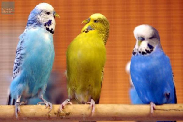 Bourse aux Oiseaux - Erdre-en-Anjou