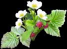 Bourse aux plantes de Couloisy