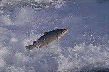 Brocante toutes Pêches - Le Passage