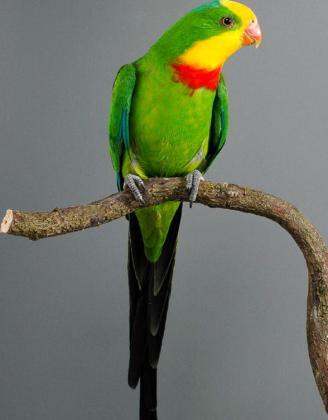 Salon de l'oiseau de Blangy-sur-Bresle