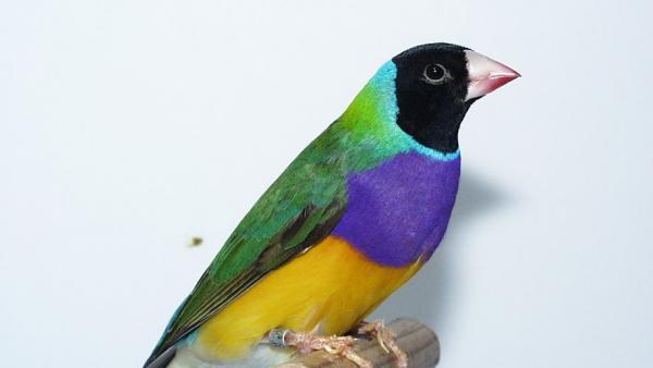Bourse aux oiseaux de Béthencourt-sur-Mer