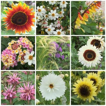 Les floralies de Saint-Médard-de-Guizières