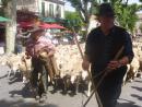 Foire à la Brocante de Saint-Rémy-de-Provence