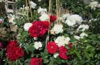 Jardin d'Automne - Fête des plantes de Fayence