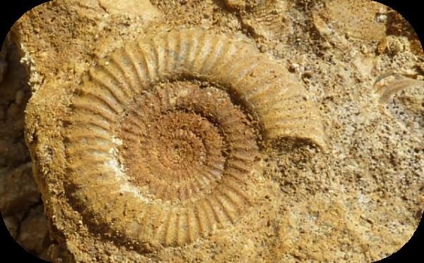 Bourse aux minéraux et fossiles de Vaires-sur-Marne