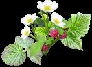 Bourses aux plantes - Oizon